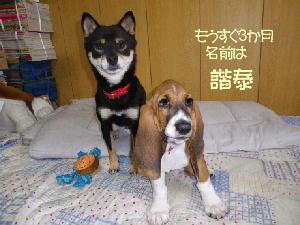 130923kuro-kana.jpg