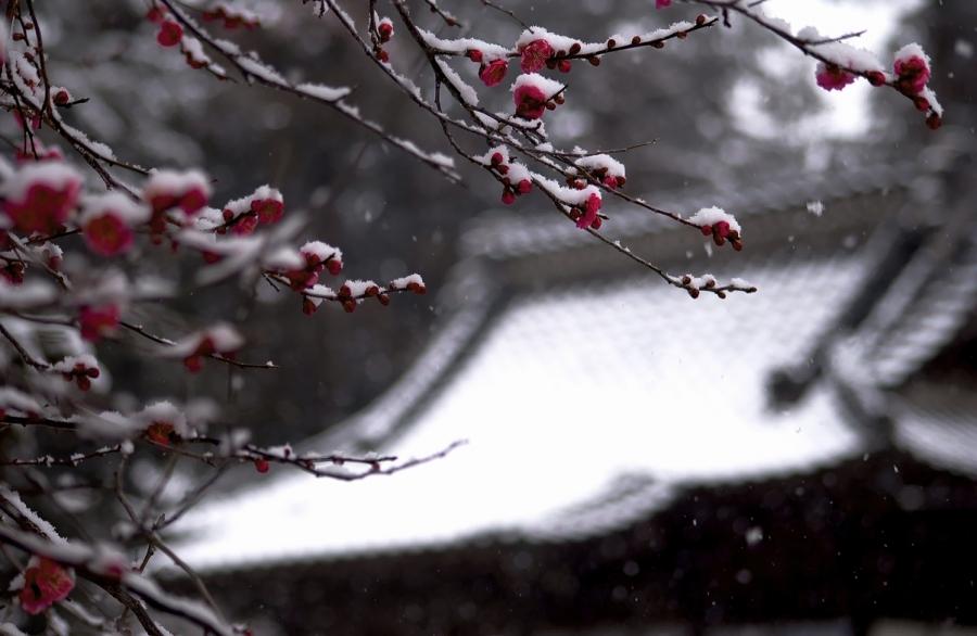 2014 02 14 梅雪 D1x (8)R@SS