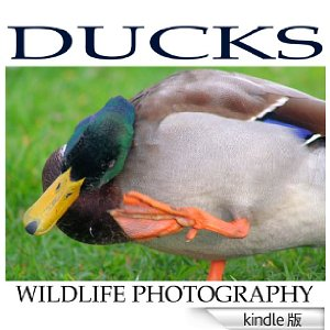 20130916_Ducks_kindle.jpg
