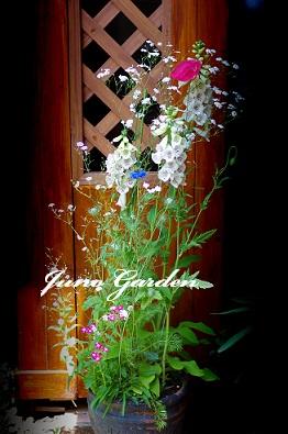 10号鉢の花