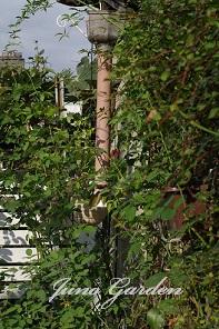 バラの横の樋