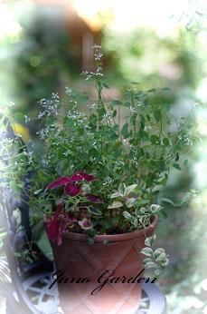 寄せ植え葉物