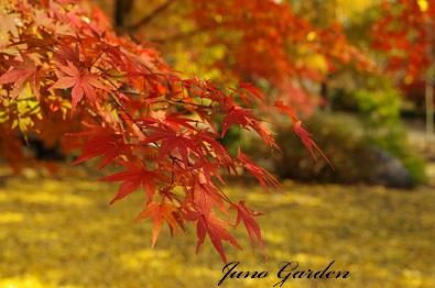 1公園紅葉