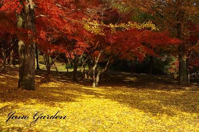 2公園紅葉