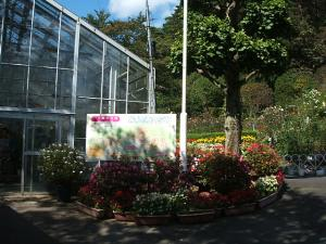 花巻温泉街バラ園2013-10-13-001