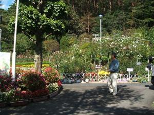 花巻温泉街バラ園2013-10-13-002
