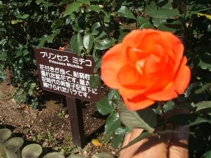 花巻温泉バラ園2013-10-13-069