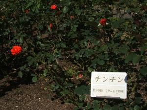 花巻温泉バラ園2013-10-13-095