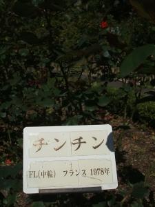 花巻温泉バラ園2013-10-13-094