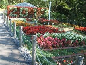 花巻温泉バラ園2013-10-13-120