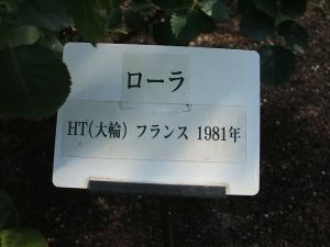 花巻温泉バラ園2013-10-13-117