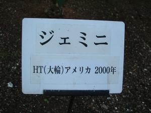 花巻温泉バラ園2013-10-13-116