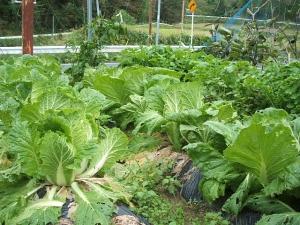 家庭菜園2013-10-21-006