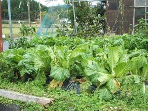 家庭菜園2013-10-21-002