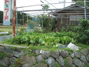 家庭菜園2013-10-21-001