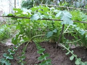 家庭菜園2013-10-21-012
