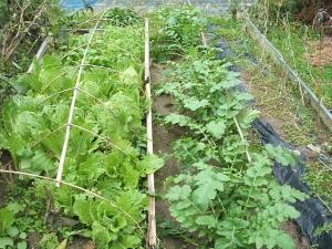 家庭菜園2013-10-21-011