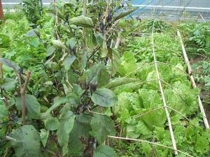 家庭菜園2013-10-21-010