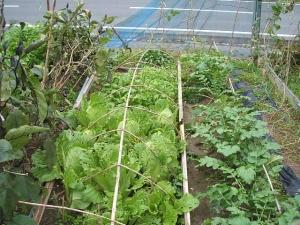 家庭菜園2013-10-21-009