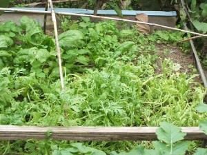 家庭菜園2013-10-21-014