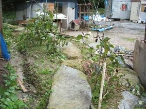 家庭菜園2013-10-21-015