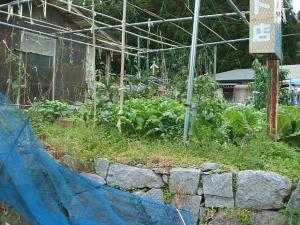 家庭菜園2013-10-21-023