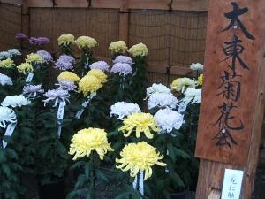 a中尊寺菊祭り2013-10-26-046