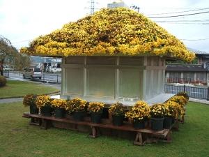 中尊寺菊祭り2013-10-26-003