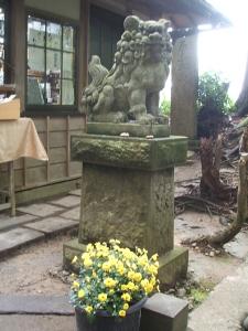 中尊寺菊祭り2013-10-26-013