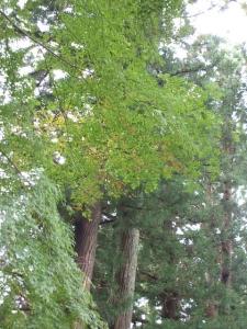 中尊寺菊祭り2013-10-26-020