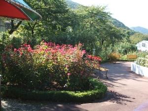 花巻温泉バラ園2013-10-13-126