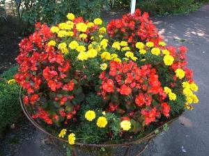 花巻温泉バラ園2013-10-13-133