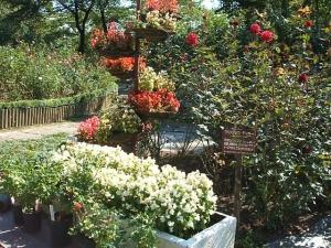 花巻温泉バラ園2013-10-13-135