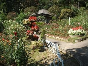 花巻温泉バラ園2013-10-13-148