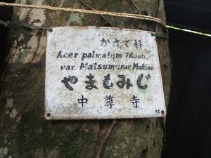 中尊寺菊祭り2013-10-26-026