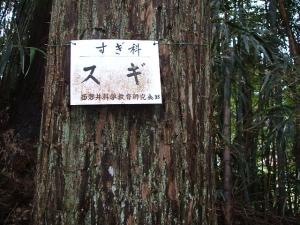 中尊寺菊祭り2013-10-26-023