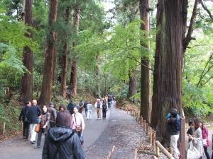 中尊寺菊祭り2013-10-26-021