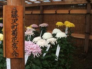 中尊寺菊祭り2013-10-26-037