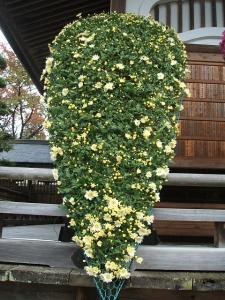 中尊寺菊祭り2013-10-26-055