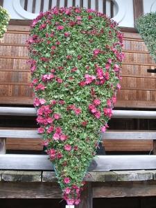 中尊寺菊祭り2013-10-26-054