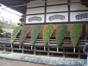 中尊寺菊祭り2013-10-26-052