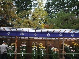中尊寺菊祭り2013-10-26-060