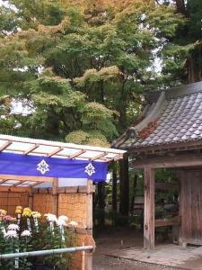 中尊寺菊祭り2013-10-26-066