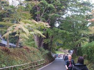 中尊寺菊祭り2013-10-26-074