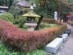 中尊寺菊祭り2013-10-26-084