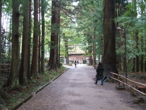 中尊寺菊祭り2013-10-26-094
