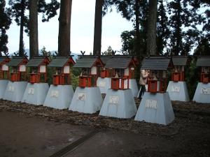 中尊寺菊祭り2013-10-26-100
