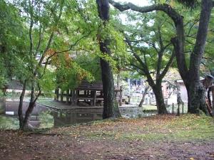 中尊寺菊祭り2013-10-26-108