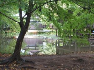 中尊寺菊祭り2013-10-26-107