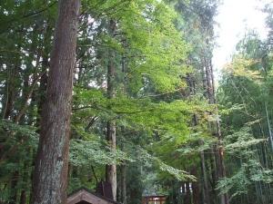 中尊寺菊祭り2013-10-26-106
